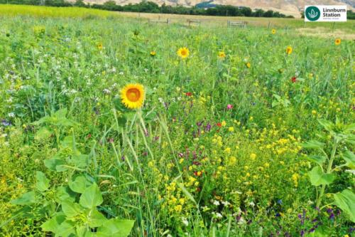 Diverse species beneficial organism mix Regenerative agriculture